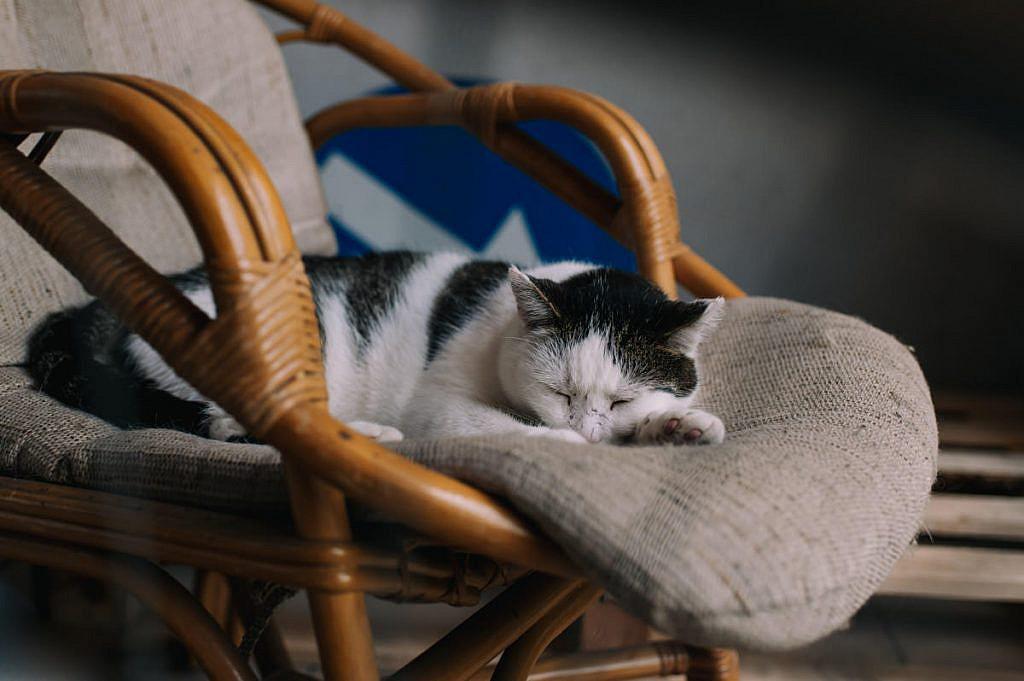 Przygotowania ślubne - śpiący kot